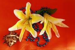 Οφθαλμοί λουλουδιών κρίνων Στοκ Εικόνες