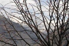 Οφθαλμοί στο δέντρο Στοκ φωτογραφία με δικαίωμα ελεύθερης χρήσης