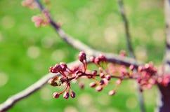 Οφθαλμοί της ρόδινης κινηματογράφησης σε πρώτο πλάνο λουλουδιών Στοκ εικόνα με δικαίωμα ελεύθερης χρήσης