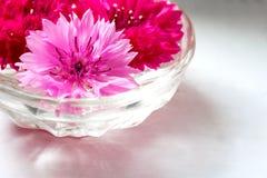 Οφθαλμοί των ρόδινων και κόκκινων cornflowers σε ένα βάζο γυαλιού σε ένα ελαφρύ υπόβαθρο Στοκ εικόνα με δικαίωμα ελεύθερης χρήσης