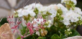 Οφθαλμός καψαλισμάτων με τα άσπρα λουλούδια Στοκ Εικόνα