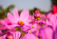 Οφθαλμός λουλουδιών Στοκ φωτογραφία με δικαίωμα ελεύθερης χρήσης