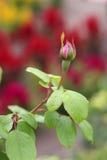 Οφθαλμός λουλουδιών Στοκ Φωτογραφίες