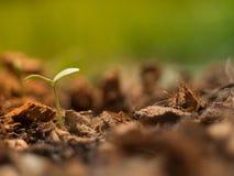 Οφθαλμός πεπονιών στο έδαφος που η αφθονία του κοΐρ καρύδων και το πρωί ανάβουν με τη μαλακή εστίαση Στοκ εικόνες με δικαίωμα ελεύθερης χρήσης