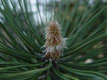 Οφθαλμός στο χριστουγεννιάτικο δέντρο Στοκ Φωτογραφίες