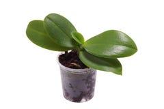 δοχείο πράσινων φυτών Στοκ εικόνες με δικαίωμα ελεύθερης χρήσης