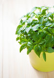 δοχείο πράσινων φυτών Στοκ Εικόνες