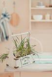 δοχείο πράσινων φυτών Στοκ Φωτογραφίες