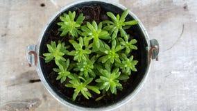 δοχείο φυτών Στοκ Εικόνες