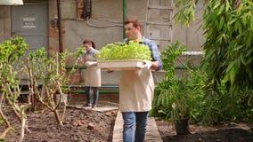 Ο άνδρας γεωπόνων με την ταμπλέτα διευθύνει την επιθεώρηση της ανάπτυξης των εγκαταστάσεων στο θερμοκήπιο με τον κηπουρό γυναικών απόθεμα βίντεο
