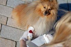 Ο άνθρωπος βάζει έναν επίδεσμο σε ένα αιμορραγώντας πόδι στοκ φωτογραφία