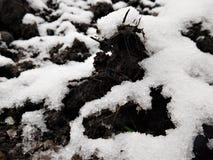 Ο άργιλος και η κοπριά κάτω από το πρώτο χιόνι Στοκ Φωτογραφίες