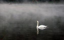 Ο άσπρος κύκνος Στοκ εικόνες με δικαίωμα ελεύθερης χρήσης