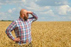 Ο άτριχος αγρότης με τη γενειάδα που στέκεται και κοιτάζει γύρω στον τομέα σίτου Η Farmer ή ο γεωπόνος επιθεωρεί την ποιότητα του στοκ εικόνες με δικαίωμα ελεύθερης χρήσης