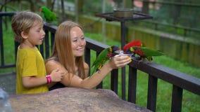 Ο έξοχος σε αργή κίνηση πυροβολισμός μιας μητέρας και ο γιος σε ένα πάρκο πουλιών ταΐζουν μια ομάδα πράσινων και κόκκινων παπαγάλ απόθεμα βίντεο