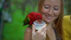 Ο έξοχος σε αργή κίνηση πυροβολισμός μιας μητέρας και ο γιος σε ένα πάρκο πουλιών ταΐζουν μια ομάδα πράσινων και κόκκινων παπαγάλ φιλμ μικρού μήκους
