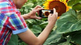Ο έξυπνος αρσενικός αγρότης παίρνει τις εικόνες των σπόρων ηλίανθων στο κινητό τηλέφωνο Γεωπόνος που χρησιμοποιεί τις σύγχρονες τ απόθεμα βίντεο