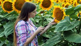 Ο έξυπνος θηλυκός αγρότης παίρνει τις εικόνες των σπόρων ηλίανθων στο κινητό τηλέφωνο Γεωπόνος που χρησιμοποιεί τις σύγχρονες τεχ απόθεμα βίντεο