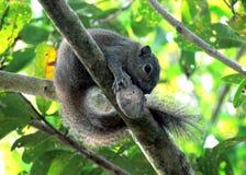 Ο έξυπνος σκίουρος στοκ εικόνες με δικαίωμα ελεύθερης χρήσης