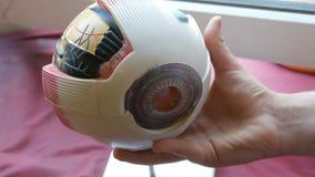 Ο έφηβος κρατά στο χέρι του ένα πρότυπο παιχνιδιών της ανατομικής δομής του ανθρώπινου ματιού Τεχνητό πρότυπο του ανθρώπου απόθεμα βίντεο