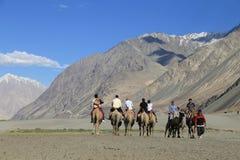 Οδήγηση καμηλών στο χωριό Hunder στα Ιμαλάια, κοιλάδα Nubra, Ladak στοκ φωτογραφία με δικαίωμα ελεύθερης χρήσης
