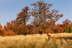 Οδήγηση ποδηλατών στα βουνά φθινοπώρου Στοκ εικόνες με δικαίωμα ελεύθερης χρήσης