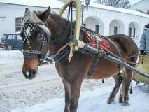 Οδήγηση πλατών αλόγου στη Ρωσία Στοκ Φωτογραφία