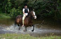 Οδήγηση πλατών αλόγου στη φύση Στοκ φωτογραφία με δικαίωμα ελεύθερης χρήσης