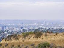 Οδήγηση πλατών αλόγου στο ίχνος λόφων Hollywood Στοκ Φωτογραφίες