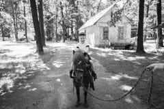 Οδήγηση πλατών αλόγου Στοκ Εικόνα