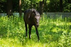 Οδήγηση πλατών αλόγου Στοκ φωτογραφίες με δικαίωμα ελεύθερης χρήσης