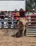 Οδήγηση του ταύρου Στοκ φωτογραφία με δικαίωμα ελεύθερης χρήσης