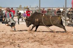 Οδήγηση του Bull ροντέο κάουμποϋ Στοκ φωτογραφίες με δικαίωμα ελεύθερης χρήσης