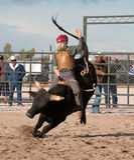 Οδήγηση του Bull ροντέο κάουμποϋ Στοκ Εικόνα