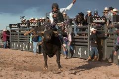 Οδήγηση του Bull ροντέο κάουμποϋ Στοκ Φωτογραφία