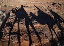 Οδήγηση των καμηλών με τις σκιές στην έρημο Στοκ φωτογραφία με δικαίωμα ελεύθερης χρήσης