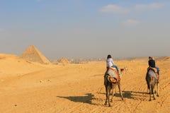 Οδήγηση των καμηλών στις πυραμίδες Giza Στοκ Φωτογραφία