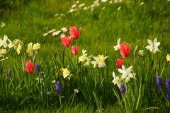 Ο ήλιος δίνει έμφαση στα λαμπρά χρώματα των λουλουδιών Γαλλία Στοκ Εικόνες