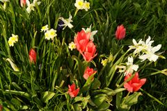 Ο ήλιος δίνει έμφαση στα λαμπρά χρώματα των λουλουδιών Γαλλία Στοκ εικόνα με δικαίωμα ελεύθερης χρήσης