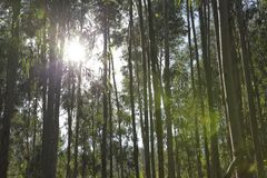 Ο ήλιος διαπερνά στα ξύλα στοκ εικόνες με δικαίωμα ελεύθερης χρήσης