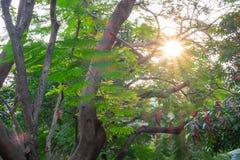 Ο ήλιος και ο ήλιος λάμπουν κάτω στο πάρκο Στοκ Φωτογραφία