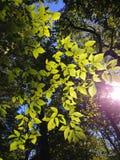 Ο ήλιος κρυφοκοιτάζει στοκ φωτογραφίες