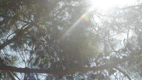 Ο ήλιος λάμπει λαμπρά μέσω ενός κλάδου δέντρων απόθεμα βίντεο
