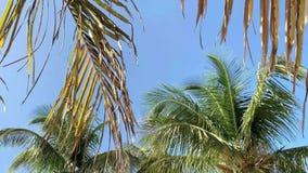 Ο ήλιος λάμπει στους φοίνικες στο υπόβαθρο μπλε ουρανού στο Μαϊάμι απόθεμα βίντεο