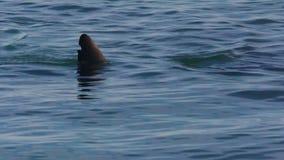 Ο ήλιος λάμπει στο δελφίνι απόθεμα βίντεο