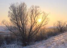 Ο ήλιος μέσω του δέντρου διακλαδίζεται το χειμώνα στοκ φωτογραφίες