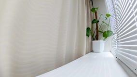 Ο ήλιος μέσω του παραθύρου και οι τυφλοί, τα λουλούδια στο windowsill απόθεμα βίντεο
