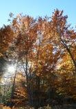 ο ήλιος που φιλτράρει μέσω των κλάδων των δέντρων στα WI φθινοπώρου Στοκ φωτογραφία με δικαίωμα ελεύθερης χρήσης