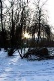 Ο ήλιος ρύθμισης στο δάσος Στοκ φωτογραφία με δικαίωμα ελεύθερης χρήσης