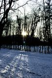 Ο ήλιος ρύθμισης στο δάσος Στοκ Εικόνες